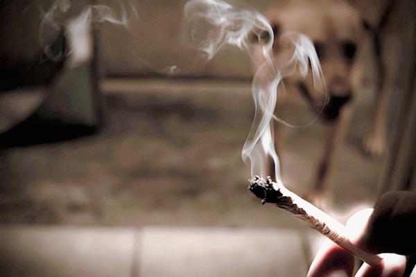 libre de humo